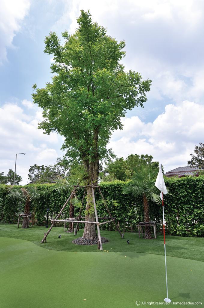 ต้นไม้มงคลปลูกในกระถาง ปลูกประดับสวนหรือปลูกไว้ในบ้านก็ได้  เสริมโชคลาภให้เป็นสิริมงคลกับคนในบ้าน ลองนำต้นไม้มงคลปลูกในกระถางไปปลูก กันดูนะคะ
